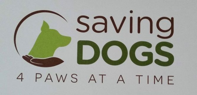 Saving Dogs 4 Paws at a Time