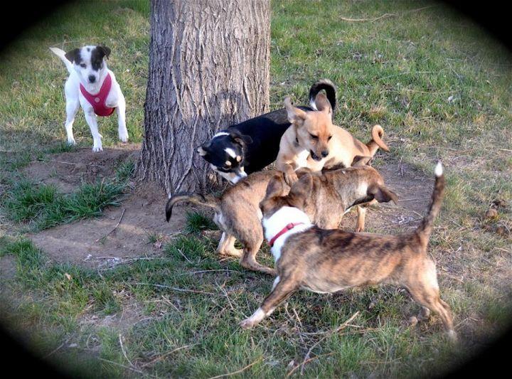 Calypso and her four crazy pups