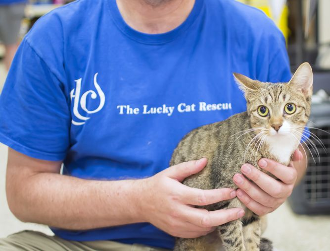 The Lucky Cat Rescue