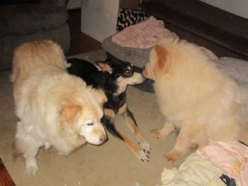Senior staff: Whitey & Kodie, Assistant: Ming