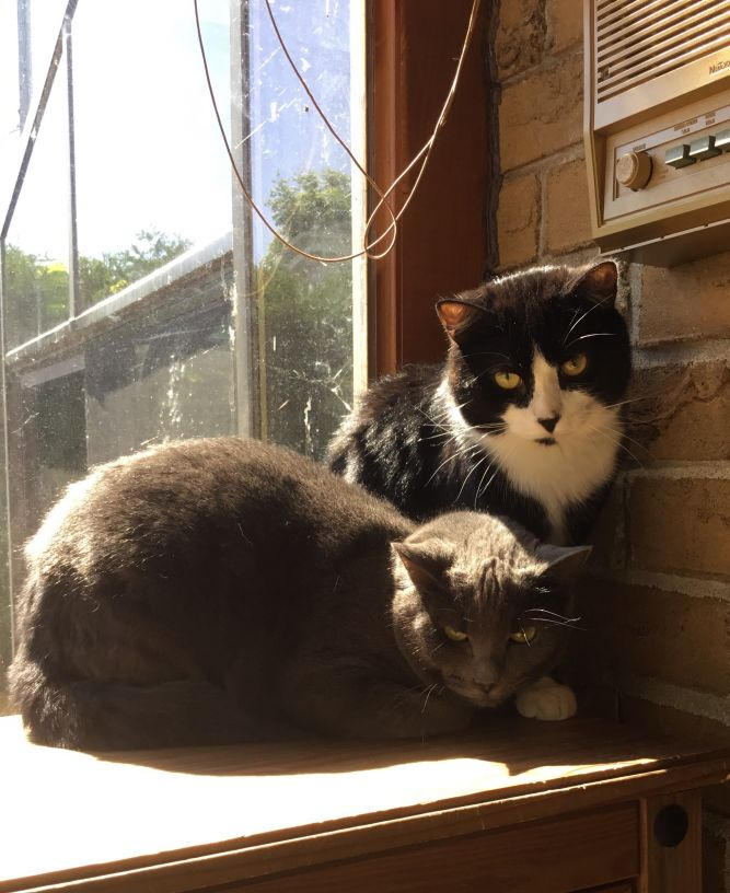 Montreal Cat Adoptions