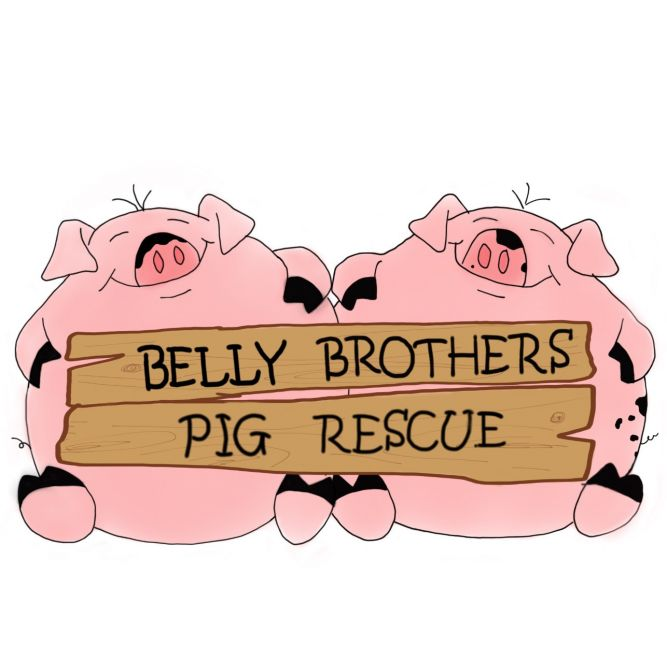 Belly Brothers Pig Rescue