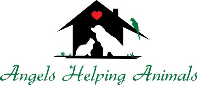 Angels Helping Animals