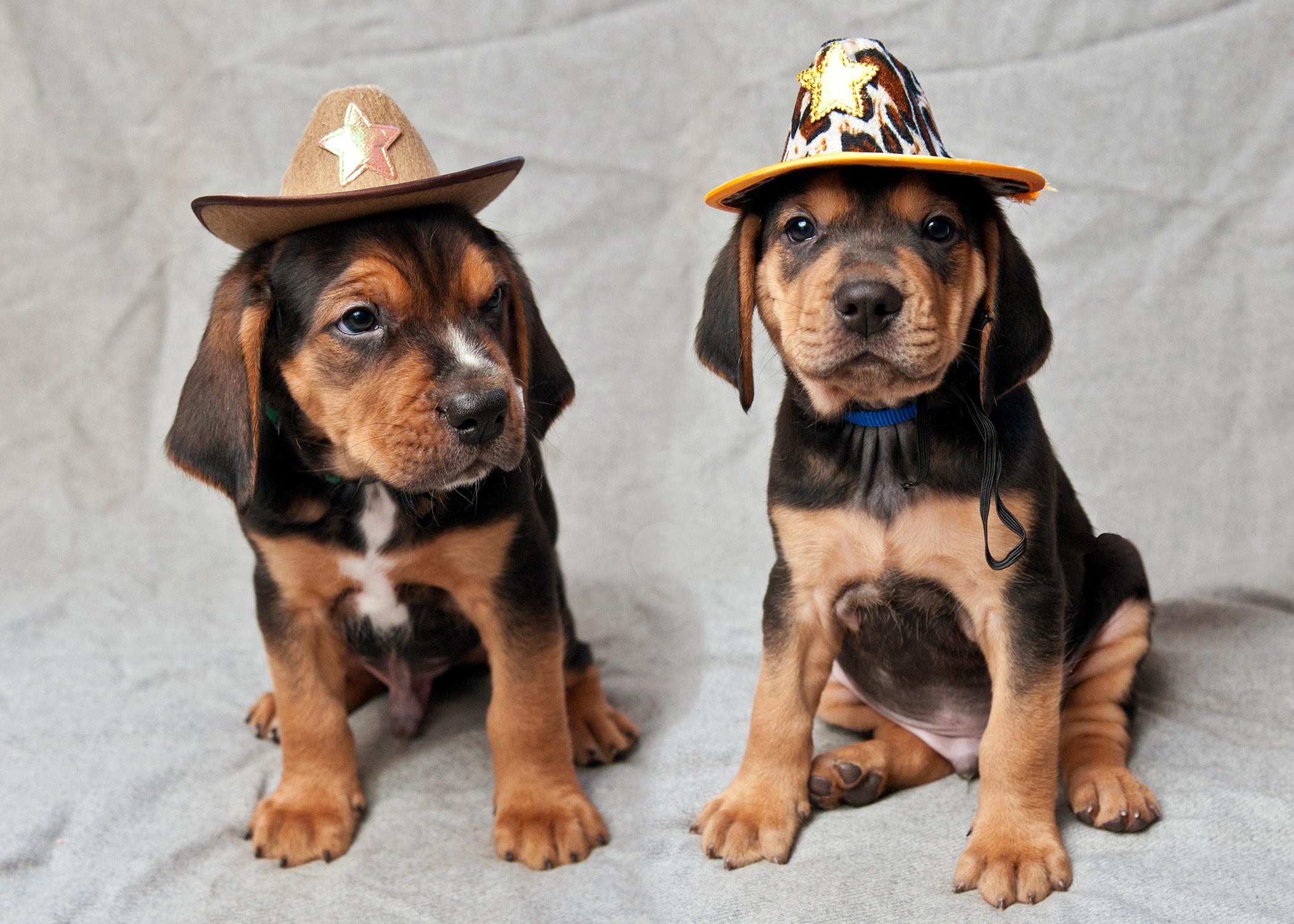 Puppies born into rescue