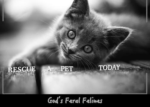 God's Feral Felines Inc.