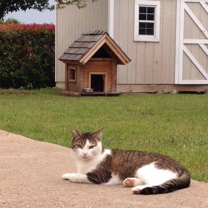 Safe Haven Cat Sanctuary