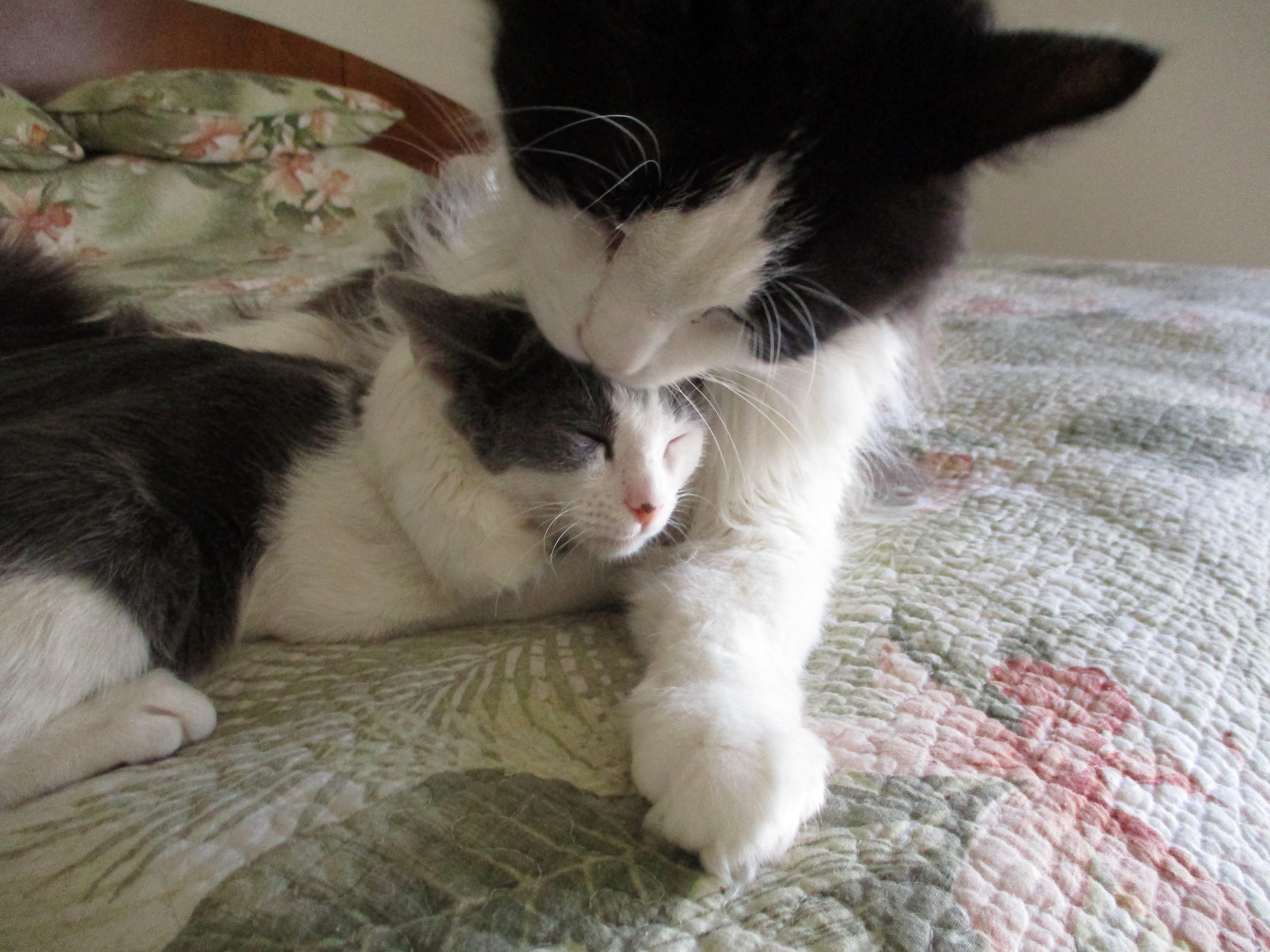 Our resident kitten caregiver!