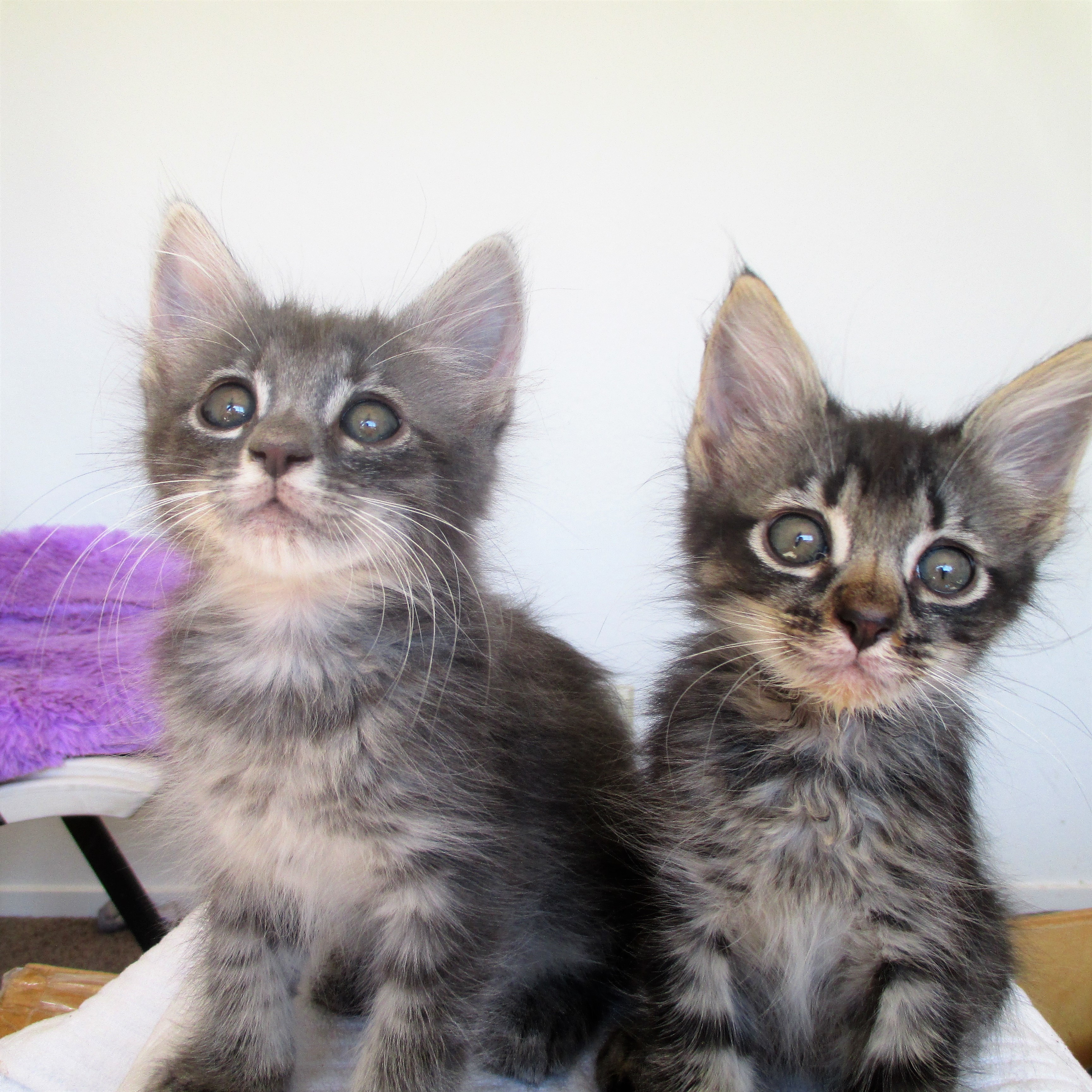 Billy & Binx adopted together!!