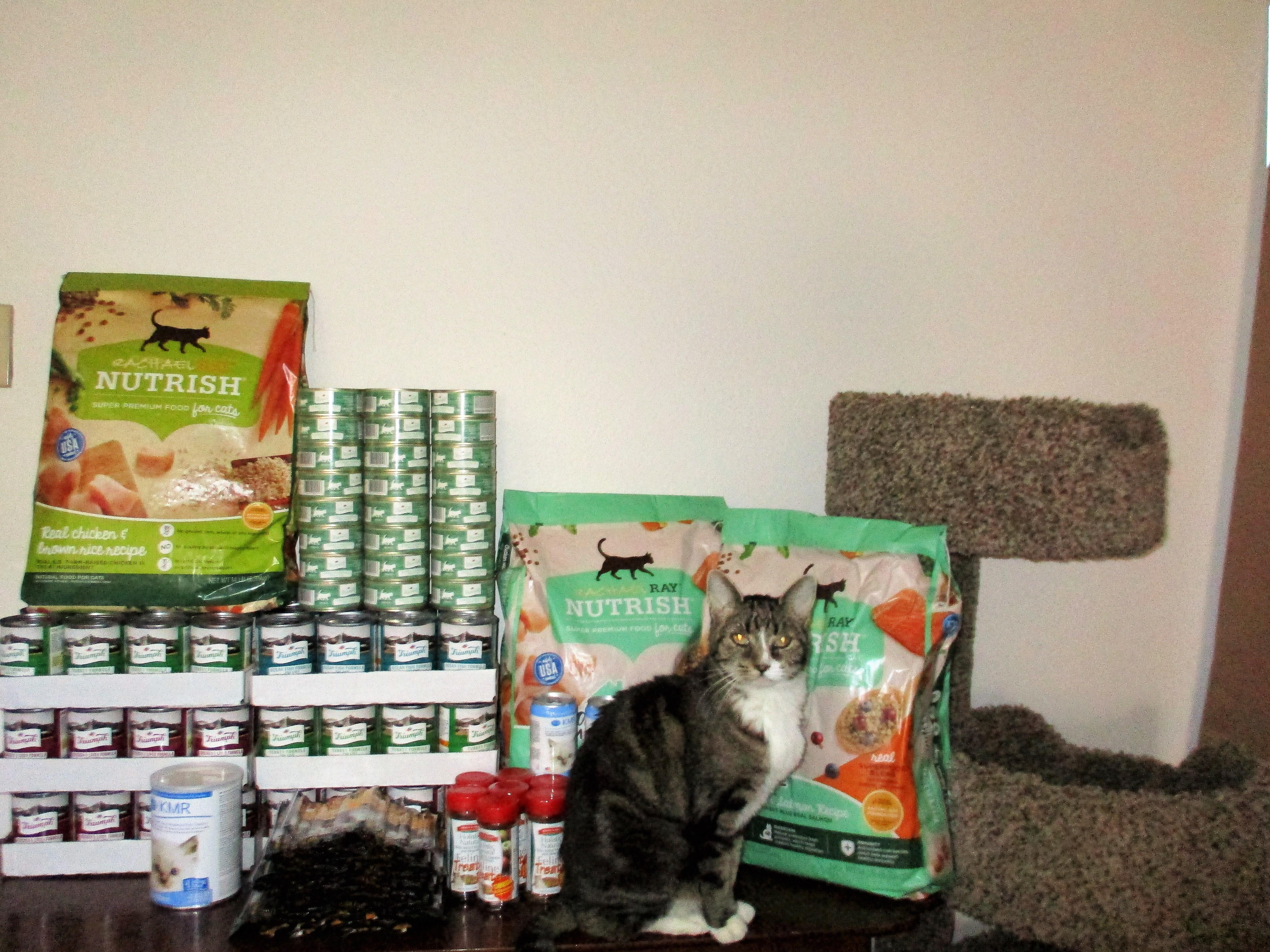 Our Senior Catizen takes inventory!