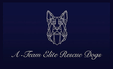 A-Team ELITE Rescue Dogs