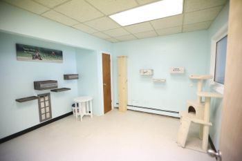 Darbster Kitty facility in Manchester, NH