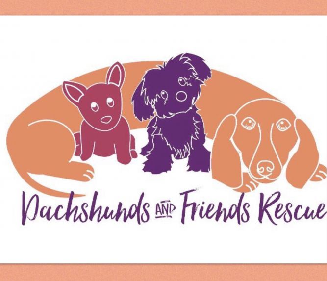 Dachshunds and Friends Rescue