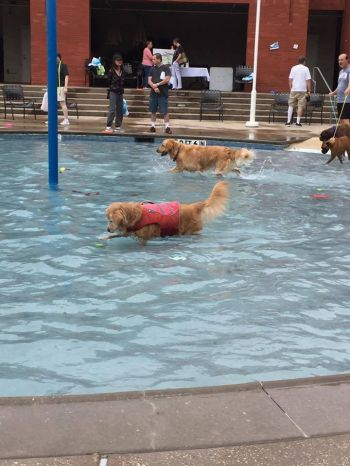Doggy Splash Day hosted by Addison Athletic Club