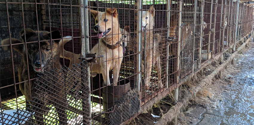 Doldol was rescued from a dog meat farm