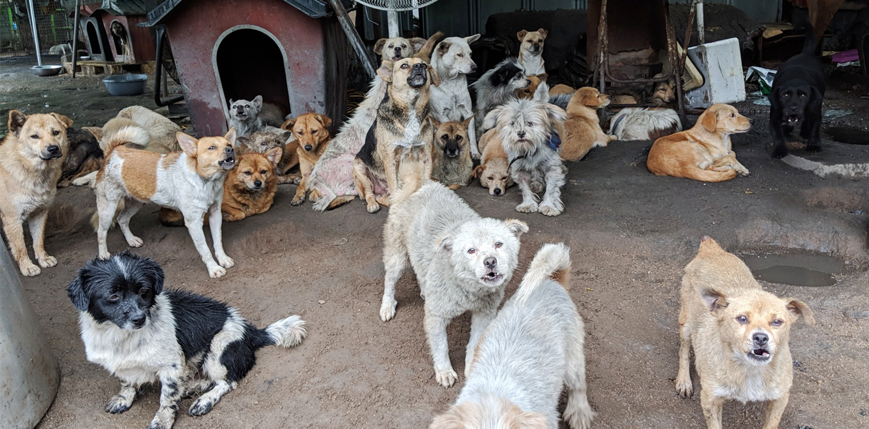 Korean rescue dogs and their adopters.