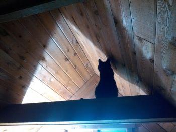 Miyu- Lurking in the shadows, as usual.