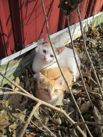 Frey & Mouse- Momma Cat's brood.