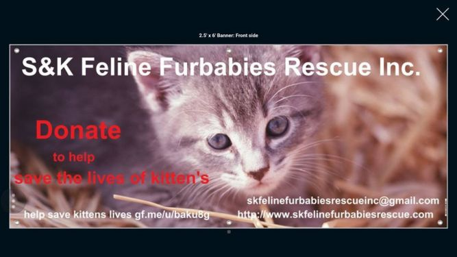 S & K Feline Furbabies Rescue