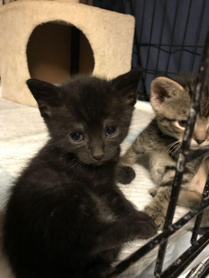 Merlin's Safe Haven Cat Rescue