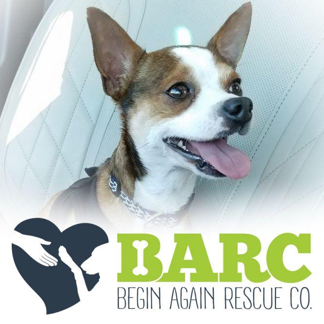 Begin Again Rescue Co.