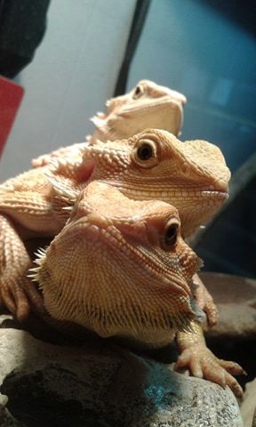We also rescue, rehab and rehome reptiles!
