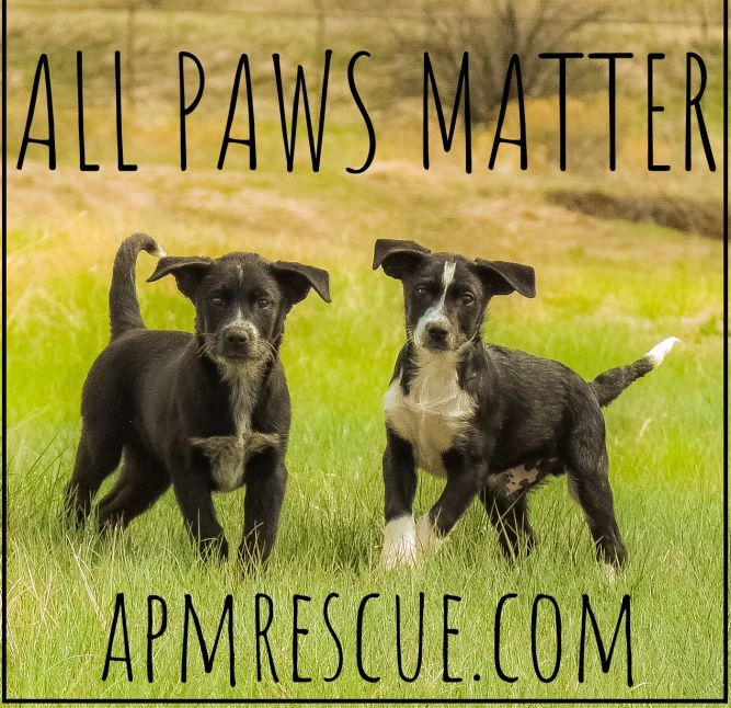 All Paws Matter Rescue