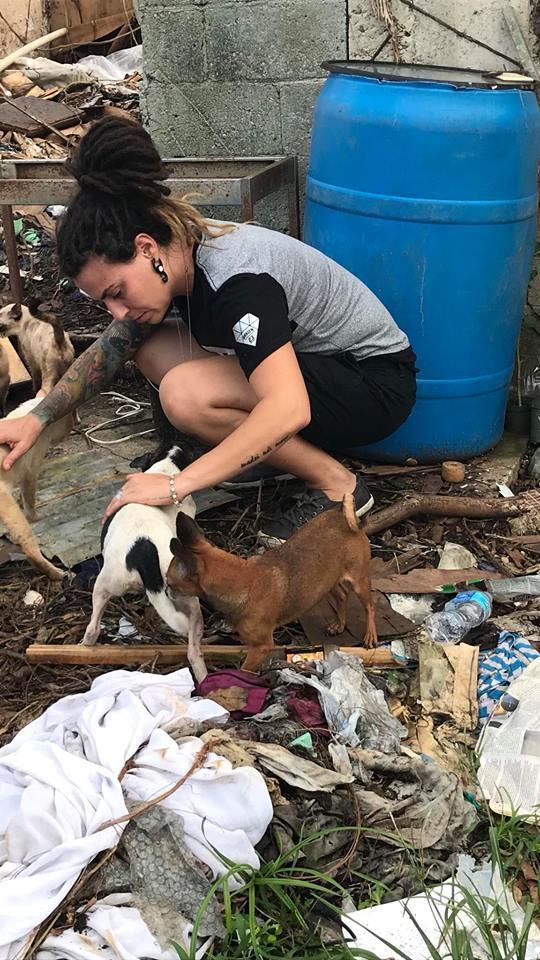Saving pups