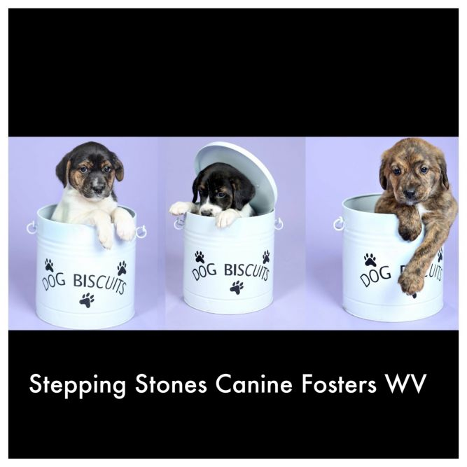 Stepping Stones Canine Fosters WV