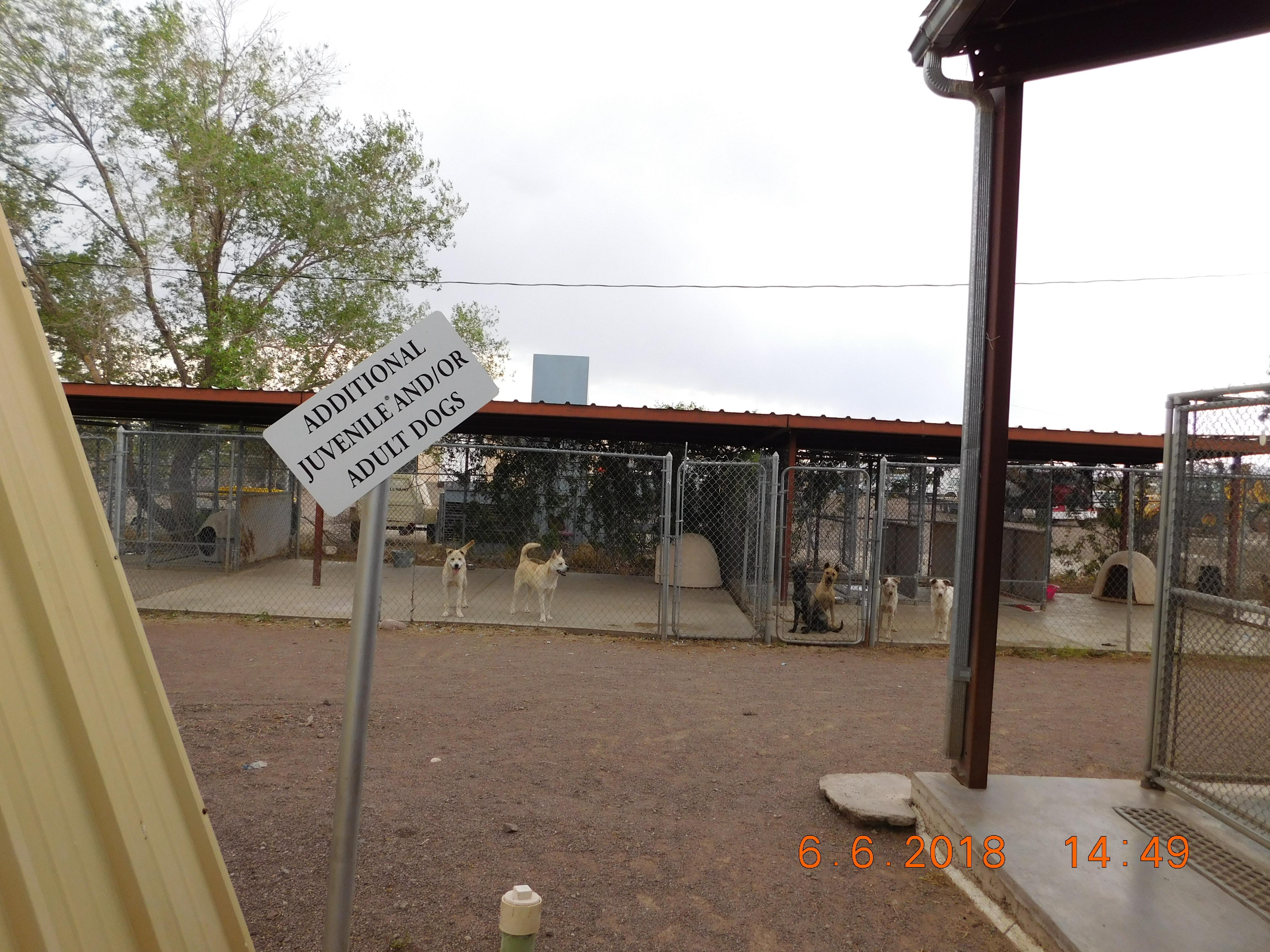 Outside kennels dog friendly area.