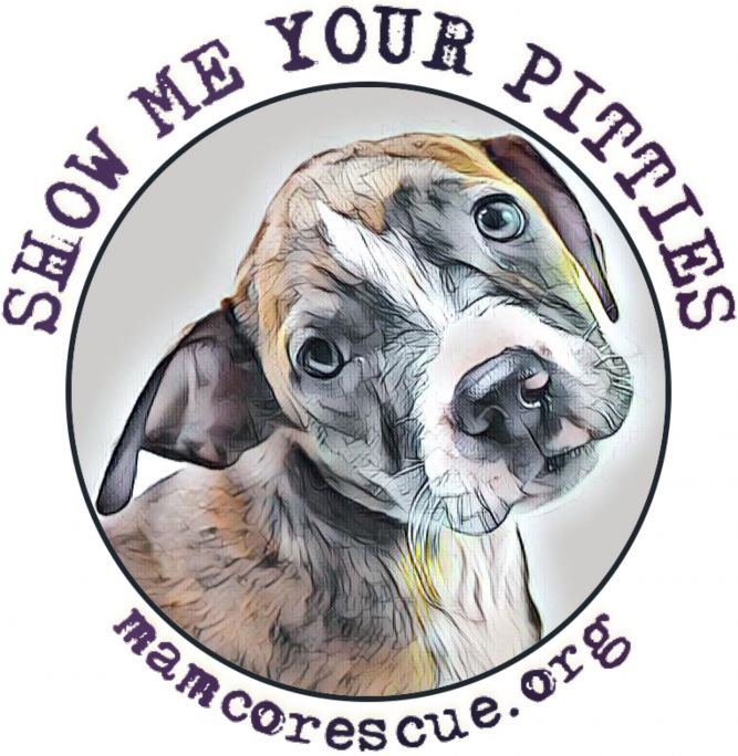Moms and Mutts: Colorado Rescue for Pregnant and Nursing Dogs