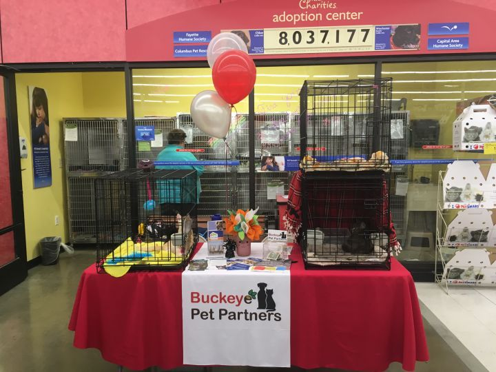 Adoption event at Petsmart Hilliard, Ohio
