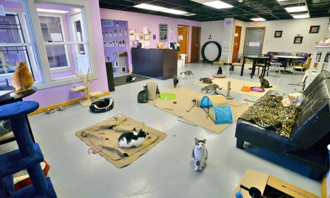 Kzoo Cat Cafe and Rescue