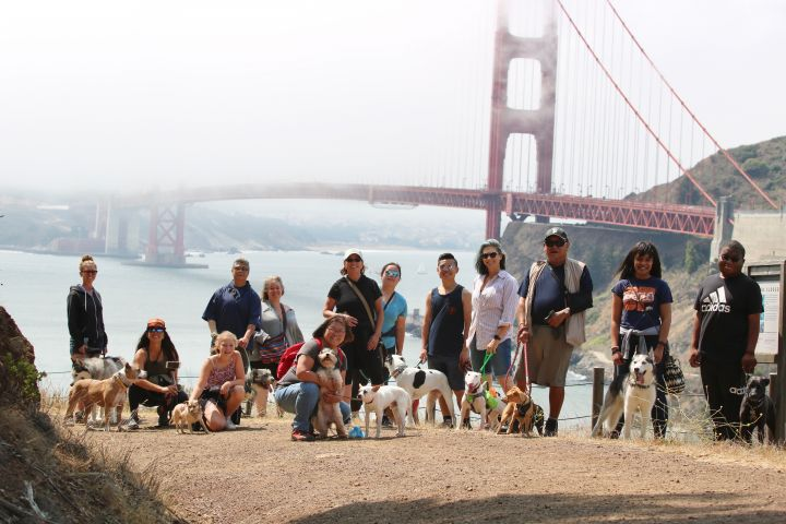 Our community pack walks are open to all dogs!