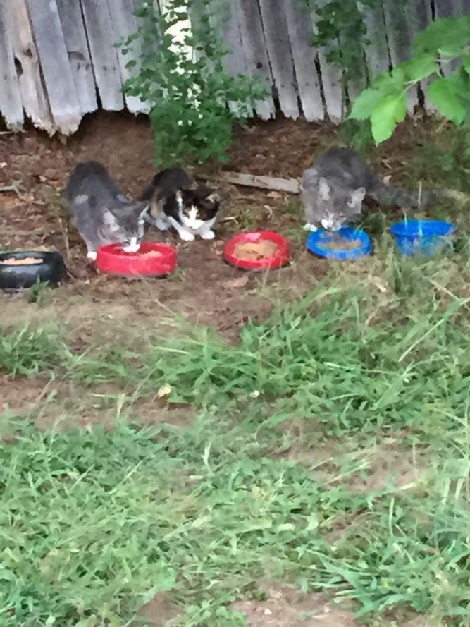 Enfield Community Cat Project