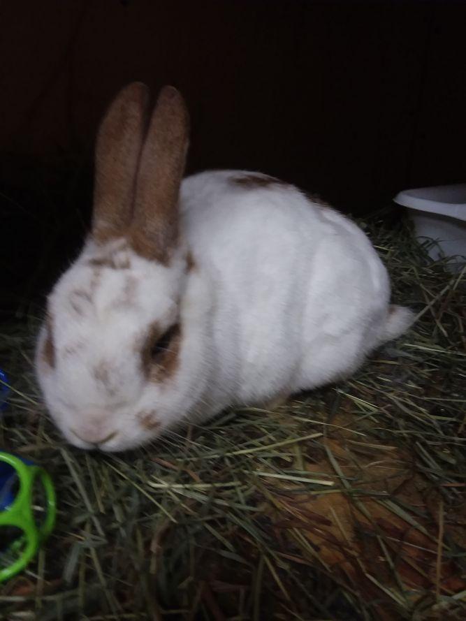 Binky Bunny Tales Rescue
