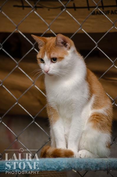 Paws 4 Life Animal Rescue, Inc.
