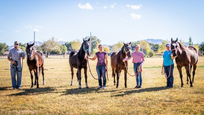 Four of our successfully rehabilitated horses.