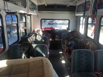Our adoption shuttle bus