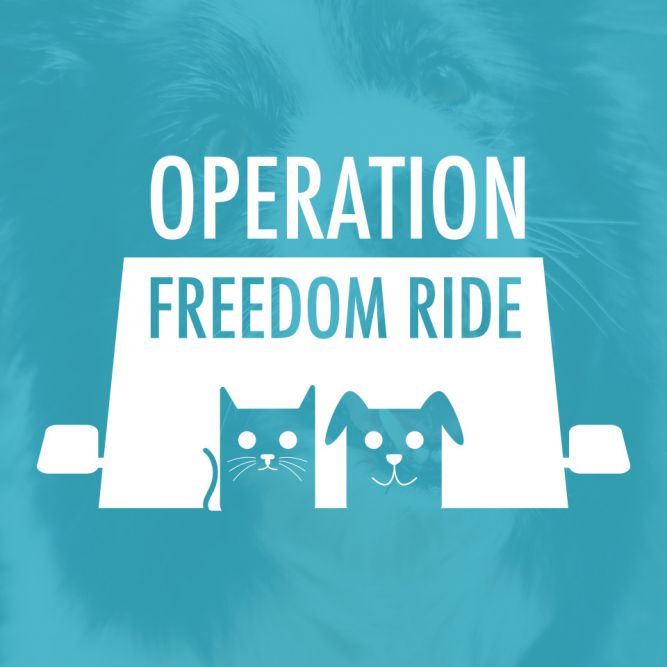 Operation Freedom Ride Inc.