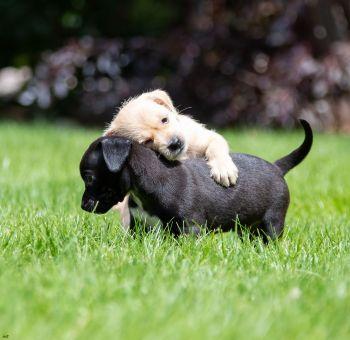 Sometime you just need a hug <3