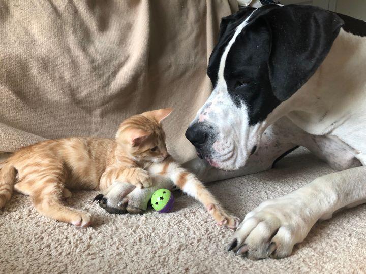 Best buddies, Gunnar and Duke!