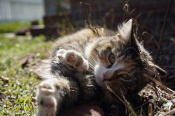 Etta, the beautiful, now spayed, mama kitty!