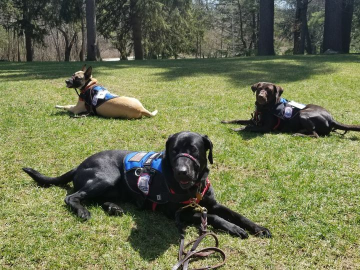 Rescue dogs as service dogs for veterans