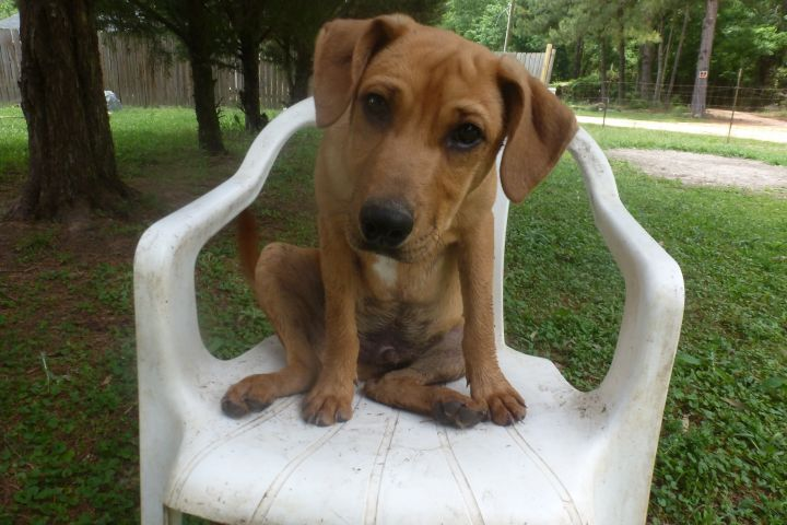 rolo is a 5 month old malb mix.