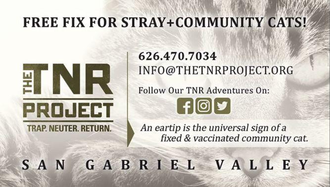 The TNR Project
