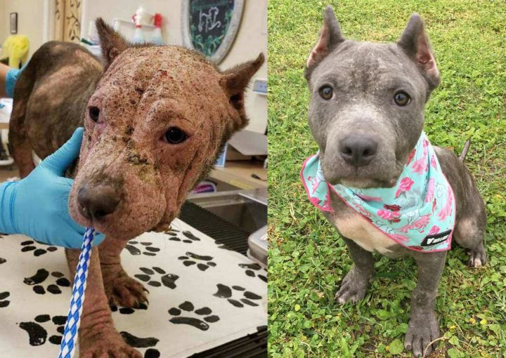Hippo Before & After