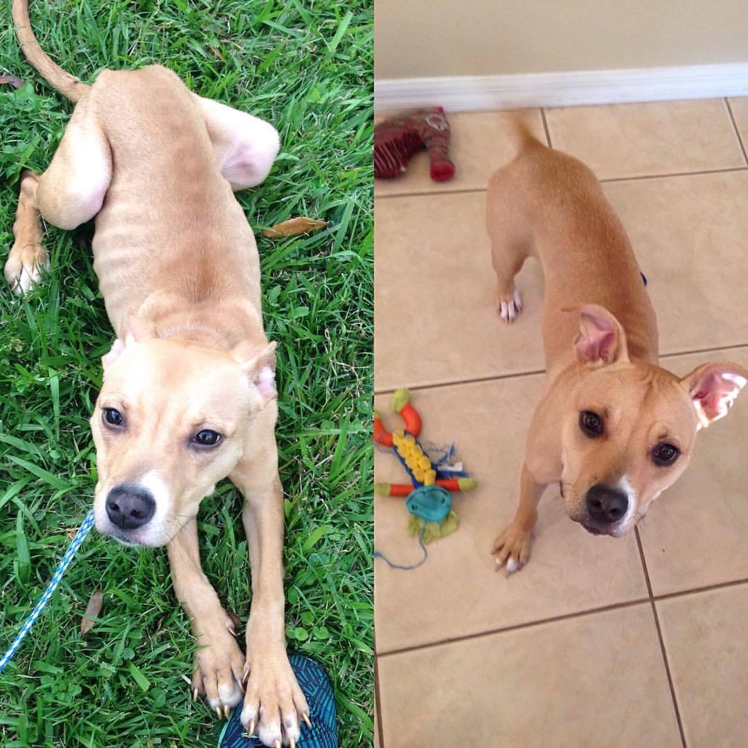 Kanga Before & After