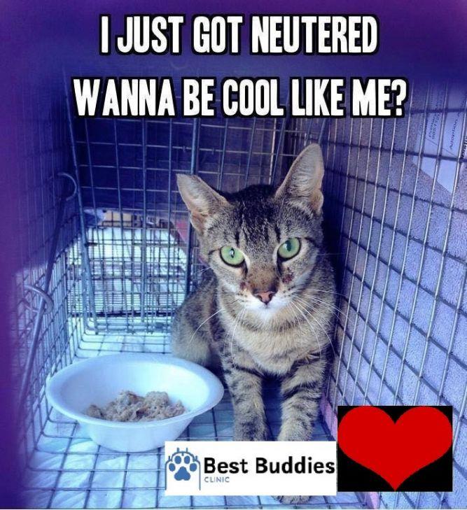 Best Buddies Inc