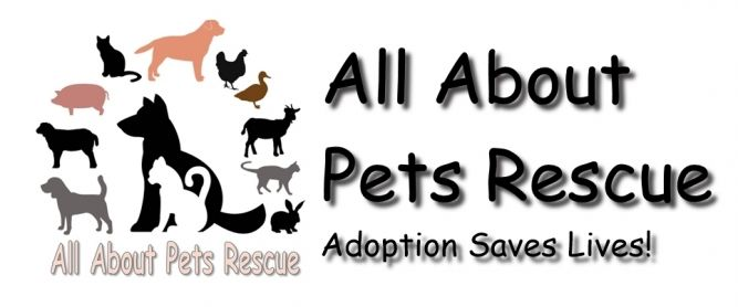 All About Pets Rescue