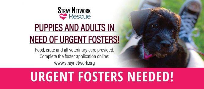 Stray Network Animal Rescue